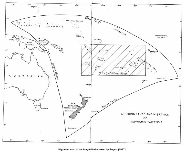 Cuckoo migration range